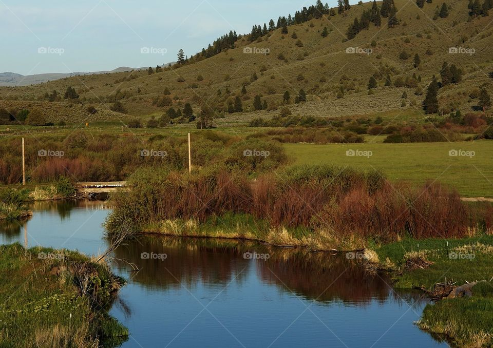 A creek with lots of bushes on its banks winds under a small bridge on the edge of farmland and green hills in Eastern Oregon on a sunny Spring day.