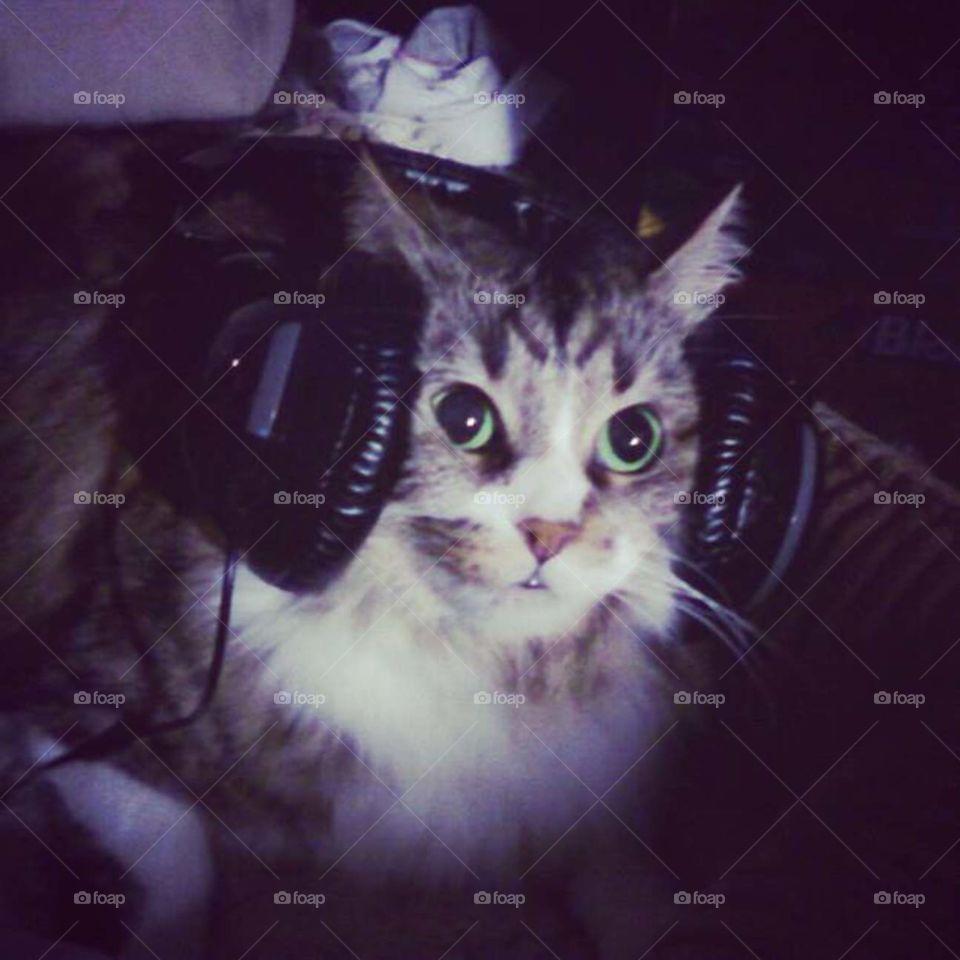 Jamming . Momo loves music!!!