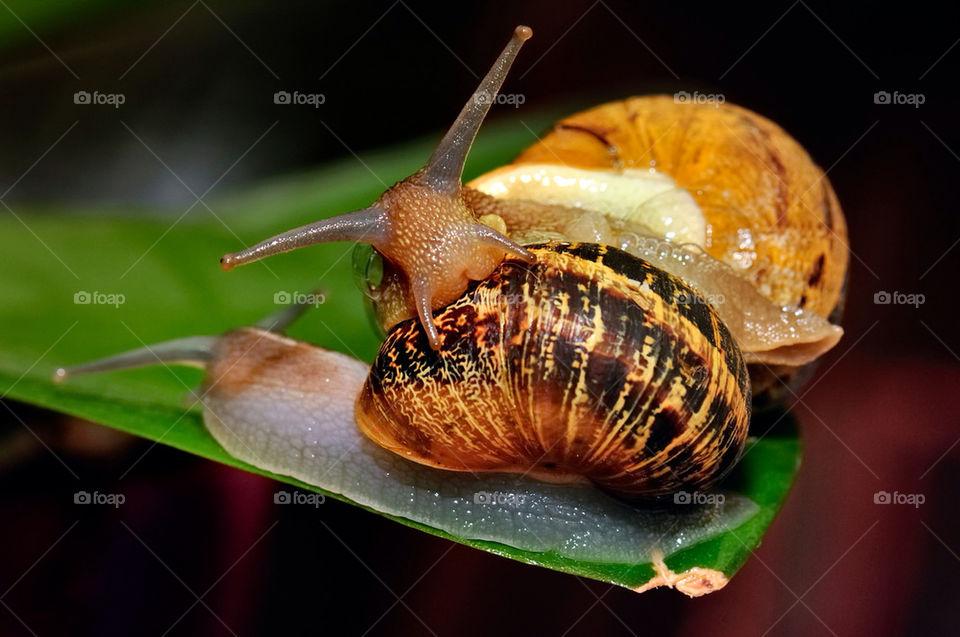 nature macro snails reproduction by jzago