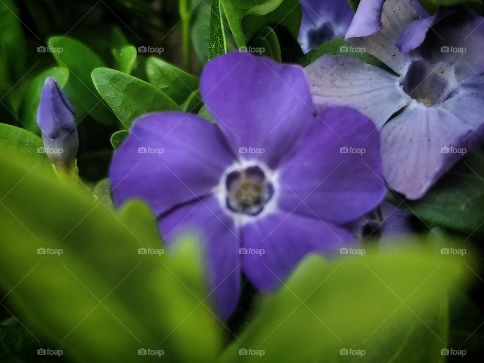 Spring is a way for us to learn and grow to be kind, and loving  remember the beauty all that is alaround us. here we  Very nice purple
