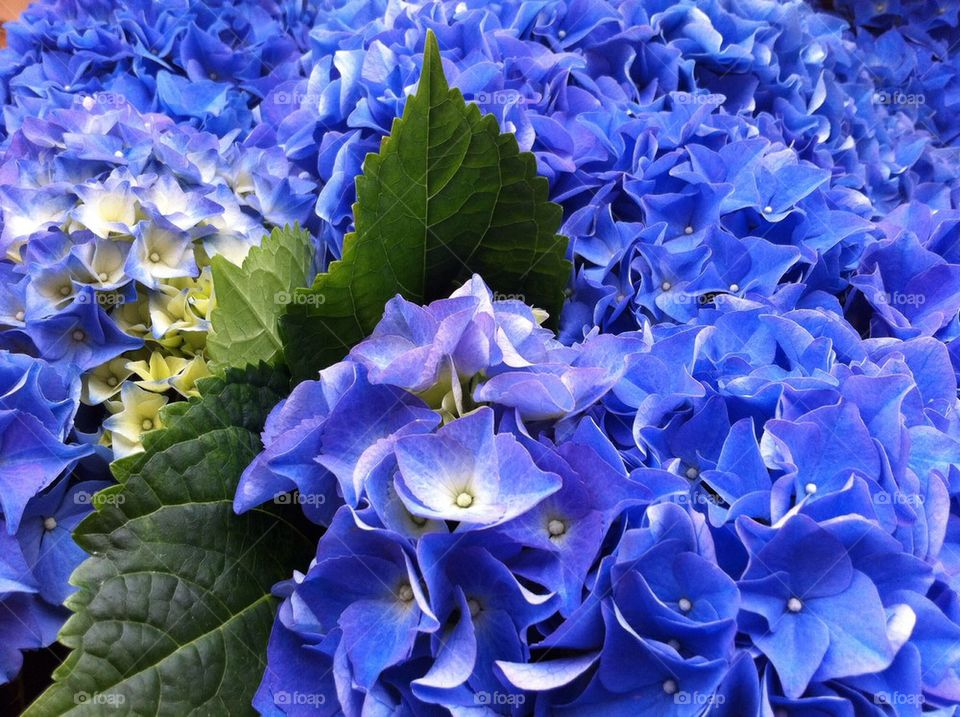 View of purple flowers