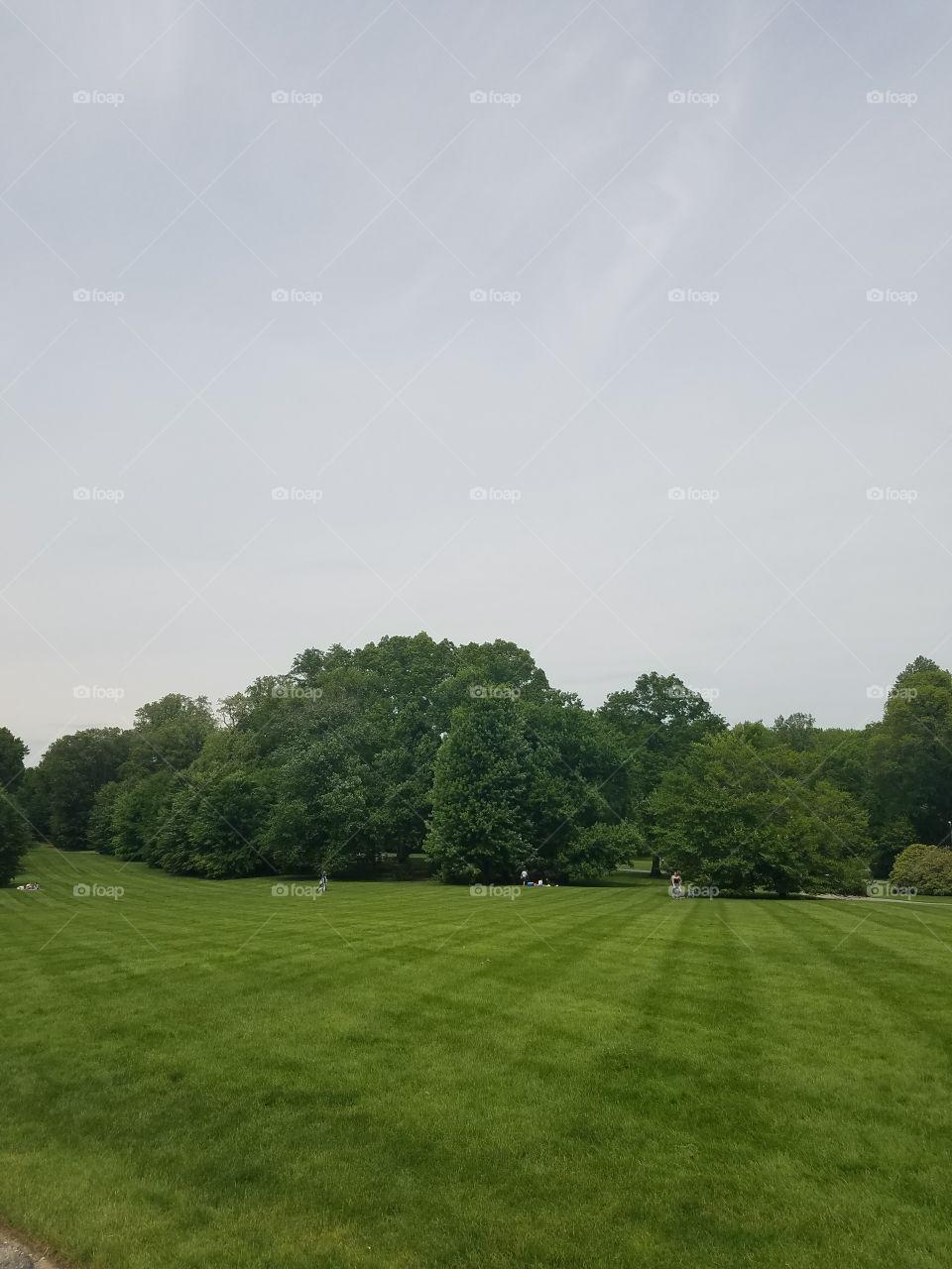 Landscape, Golf, No Person, Grass, Tree