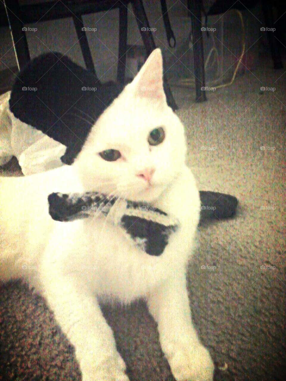 Korin in his tophat and bowtie