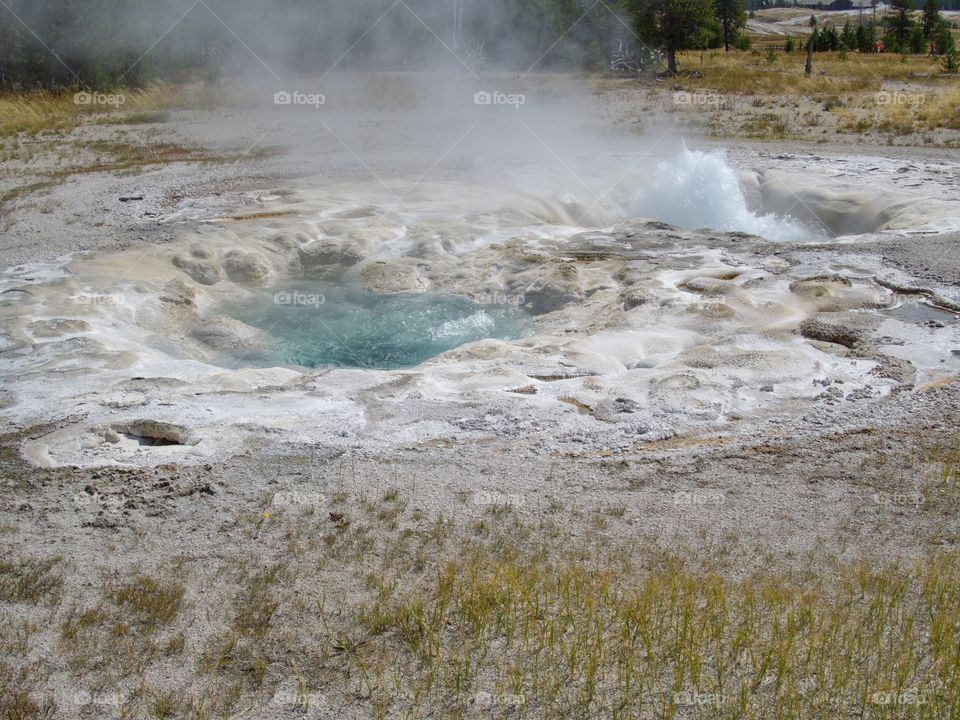 A beautiful pair of geysers on Geyser Hill in Yellowstone National Park boiling as it erupts on a sunny summer day.
