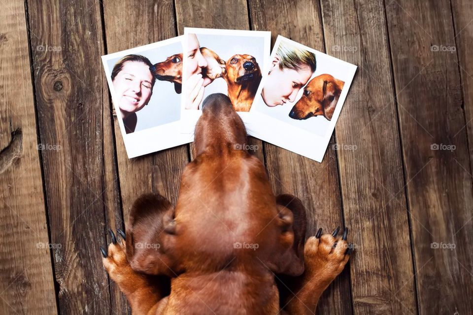 Cute dog with photo