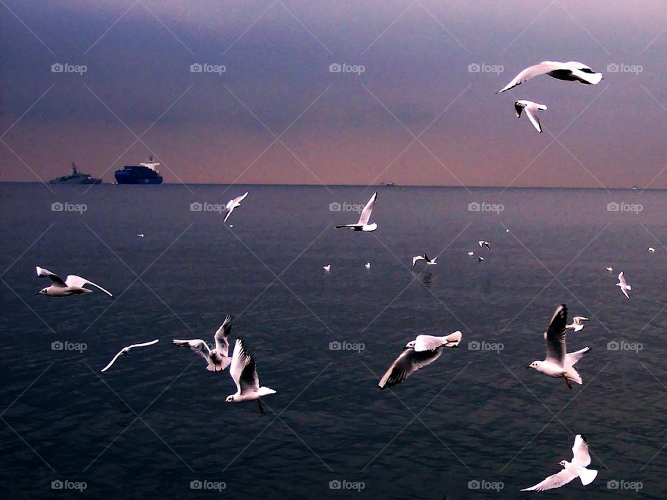 gulls of the gulf