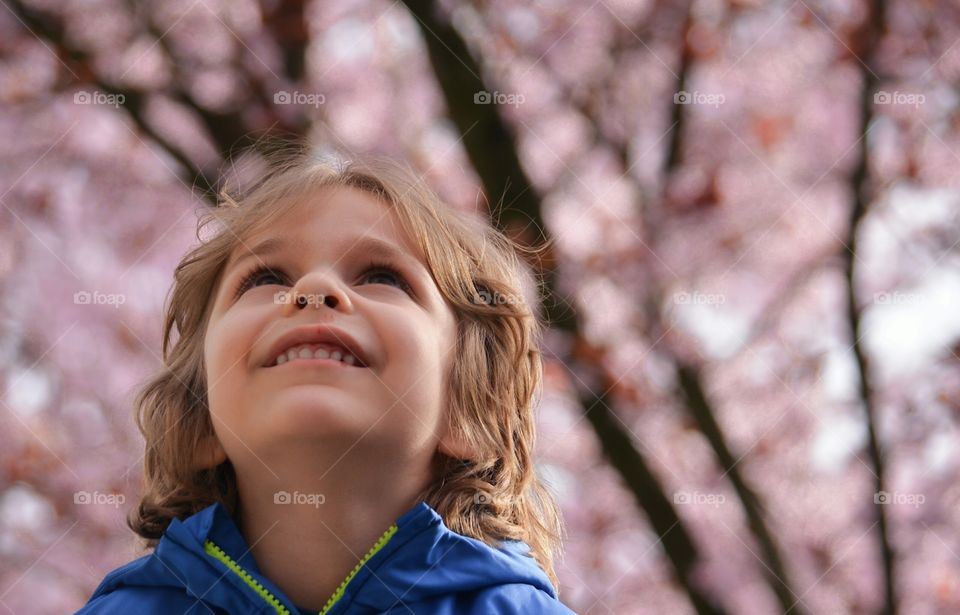 Looking Up. Our son was on my husband's shoulders just gazing at the blossoms.