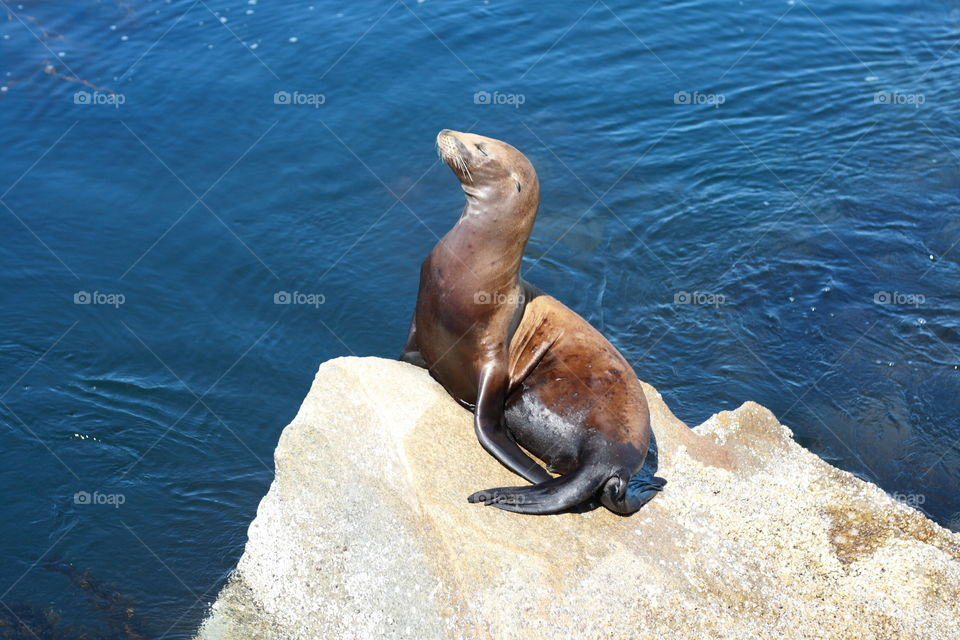Baby sea loin sitting on a rock waiting for his mom