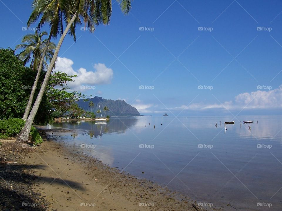A Tranquil bay in the Tropics. Sailboats moored in a placid bay.