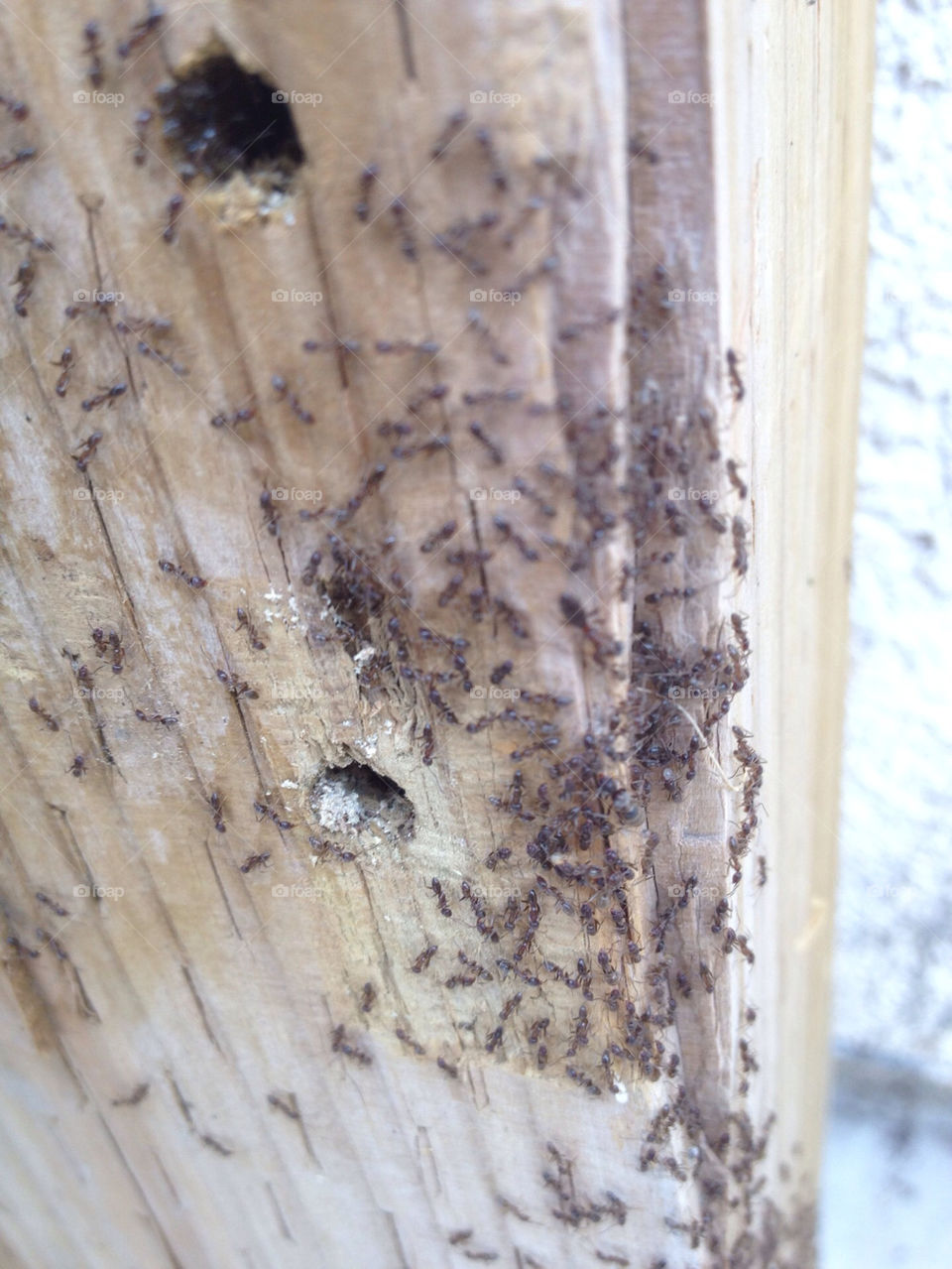 wood home ants exterminator by awthentik