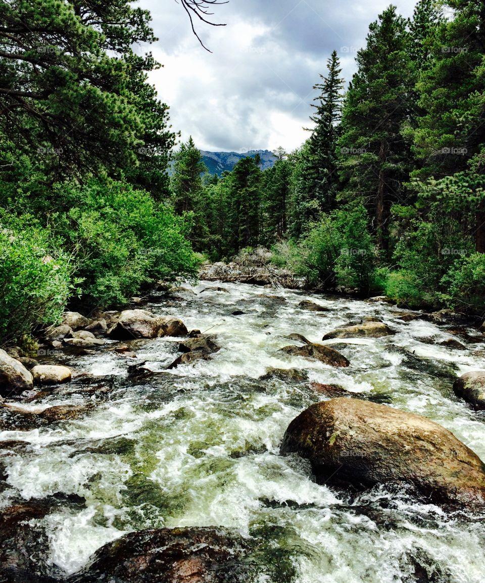 River running thru a Colorado forest