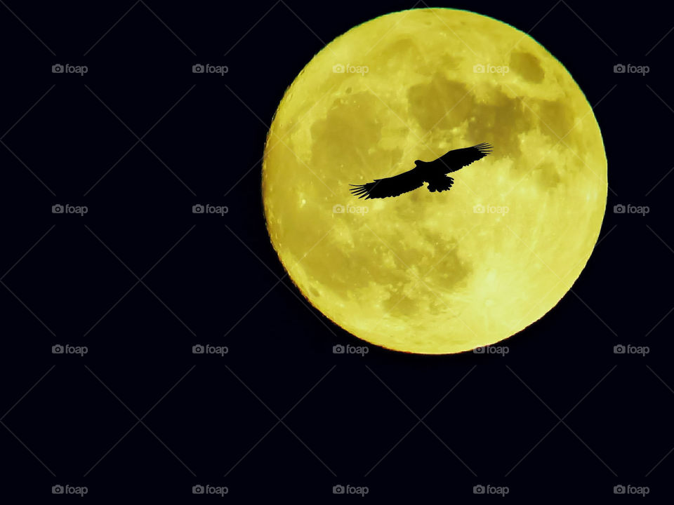 Large Bird Flying Past A Bright Yellow Harvest Moon