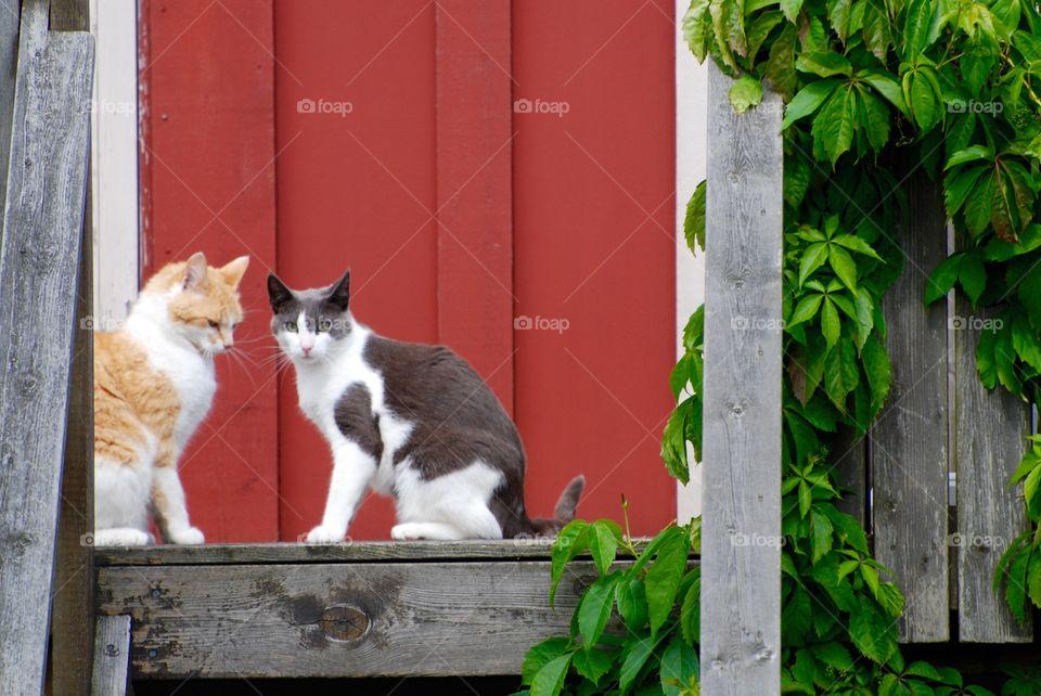 Domestic cats. Domestic cats