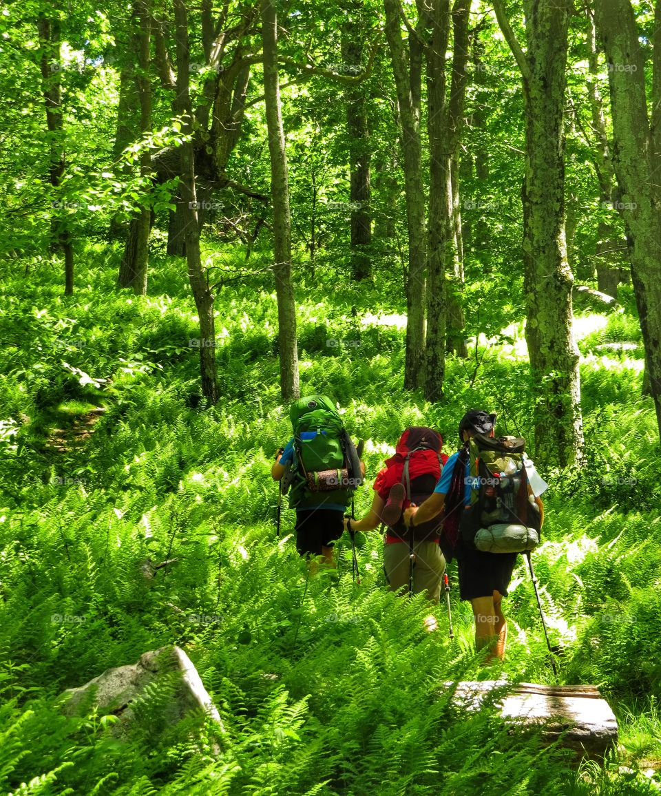 Backpackers hiking on the Appalachian Trail.