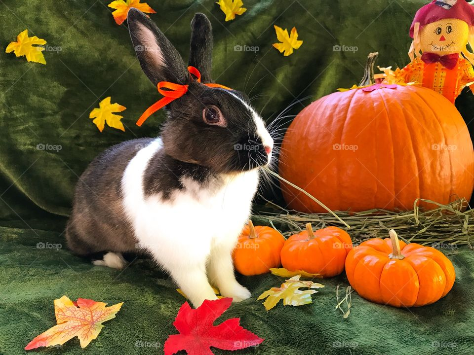 Fall festive bunny rabbit with pumpkin and scarecrow