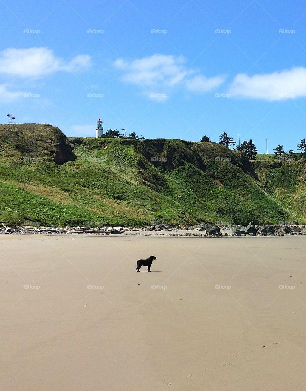 Dog and light house