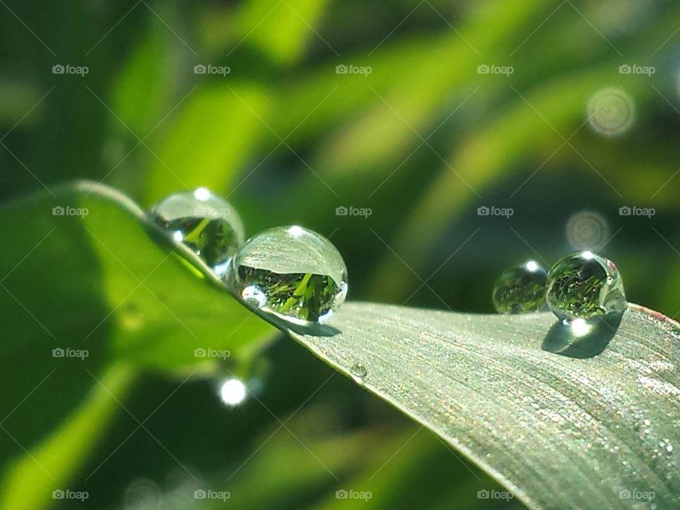 Dew Drop Diamonds