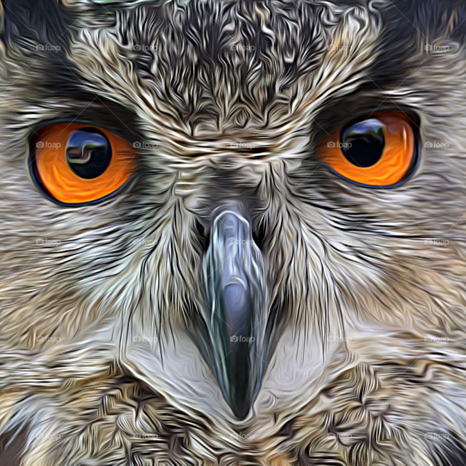 Macro shot of owl