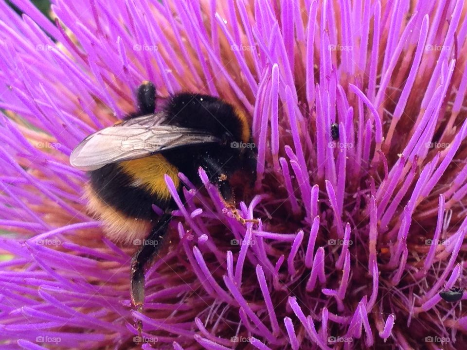 Bumblebee with pink flower