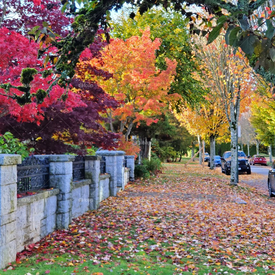 Autumn has never appeared so vibrant and lively..Variety of colours is amazing.A shot taken after work October afternoon in Vancouver,BC canada.