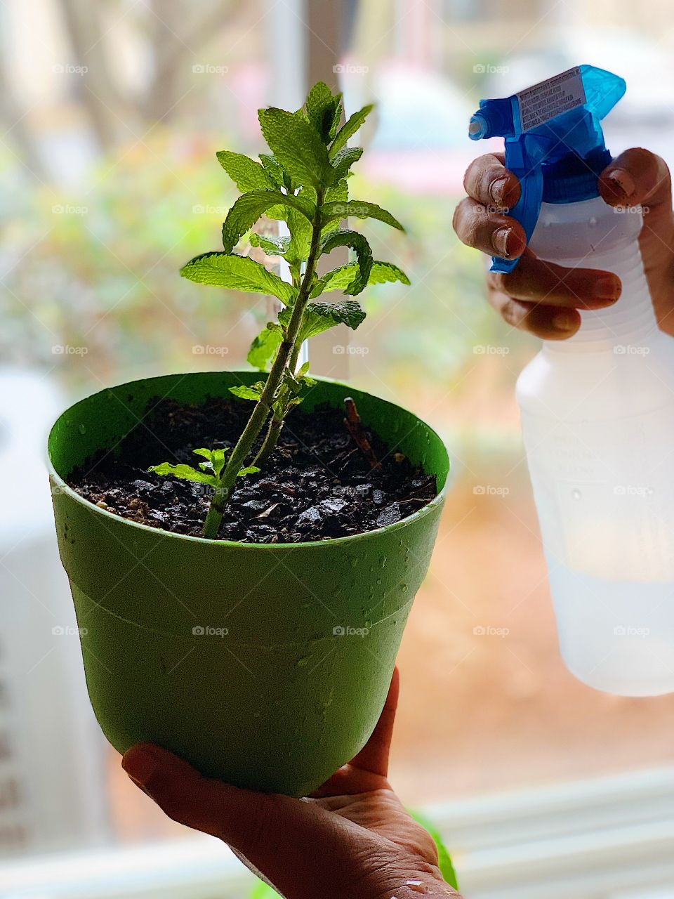 Plantation, pot, home plants, urban living, green, watering plants at home, kitchen garden, green plants in plots, sustainable life, renewable, sustainability
