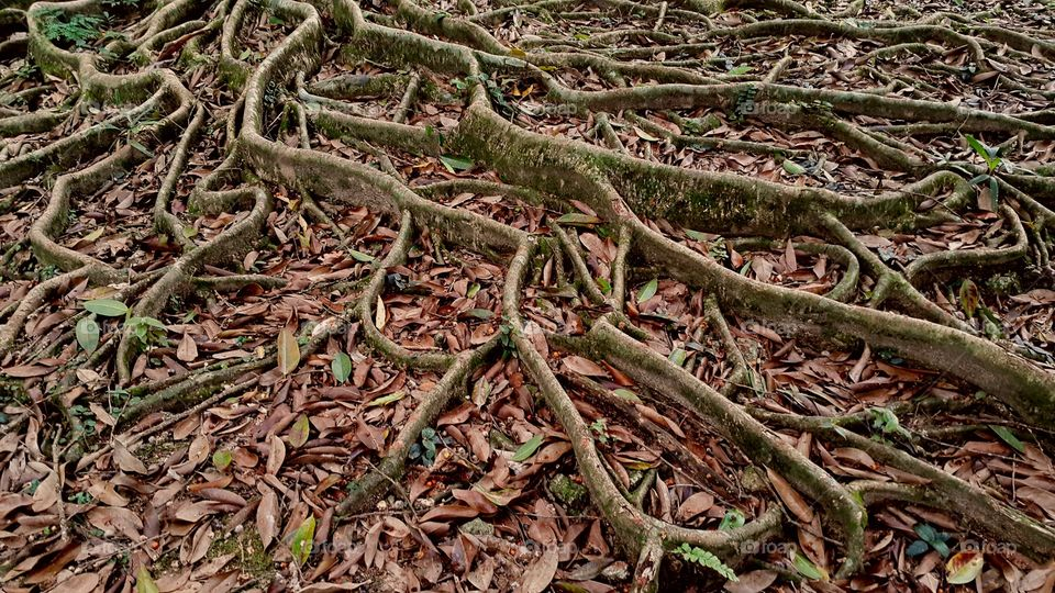 Close-up of tree roots
