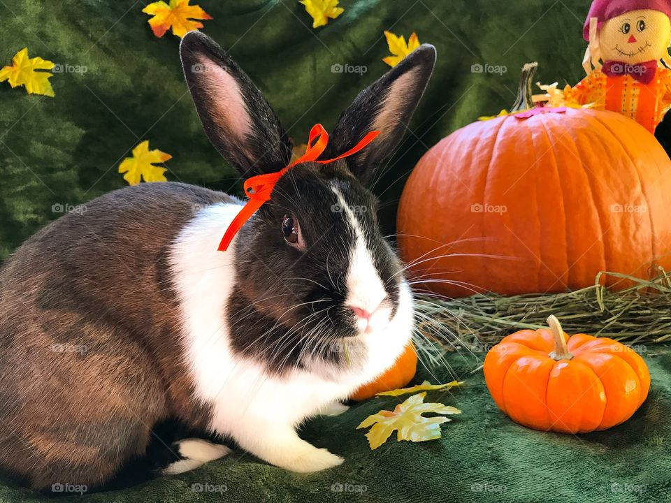Happy fall ya'll ! Pumpkins and pretty bunny