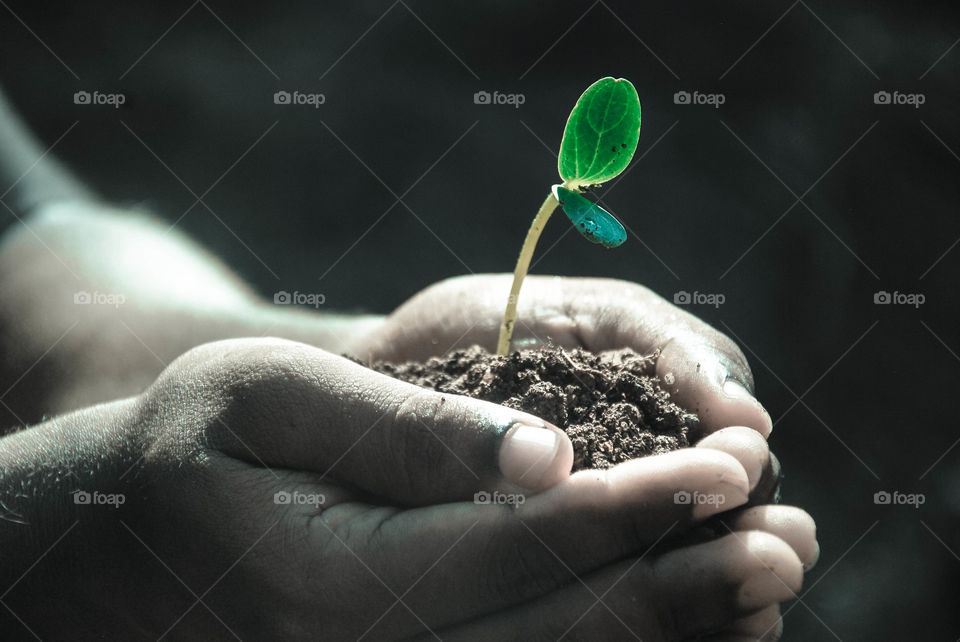 Person's hand holding soil and plant