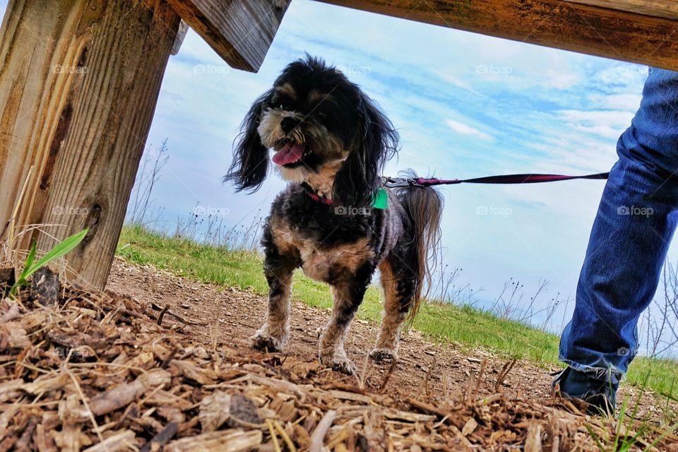 Dog on Lake Bluff