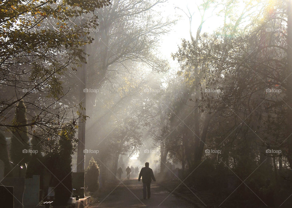 Silhouettes of people walking into the tunnel of light in the park, trees and sun beams