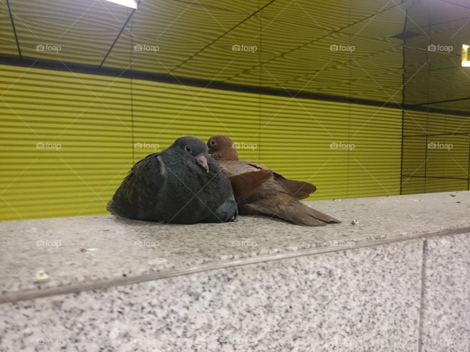 Pigeons in the Munich underground railway