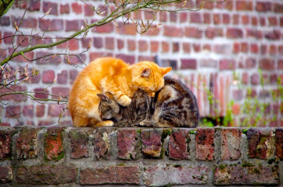 Two cat resting together