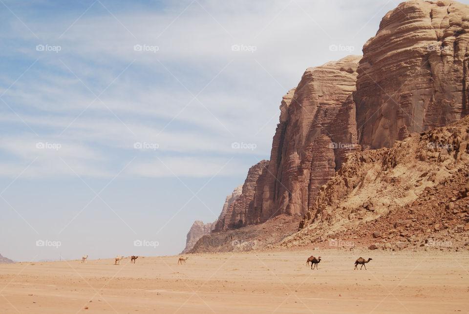 sand rocks rum camel by shanthib