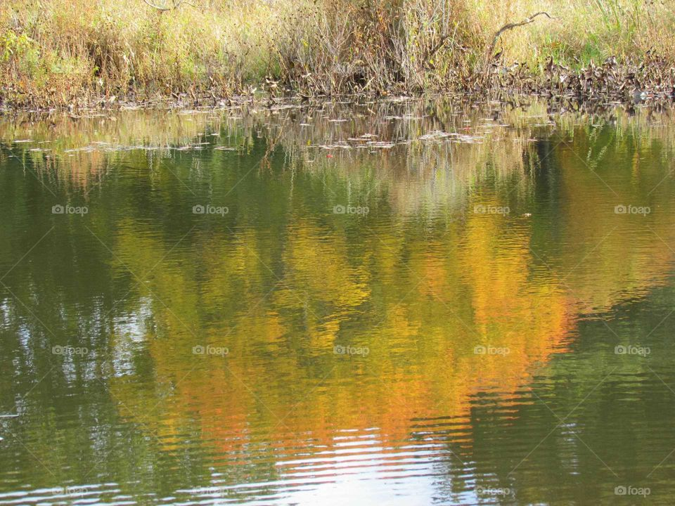 autumn reflections on a cloudy day
