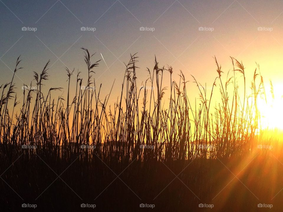 Straws at sunset