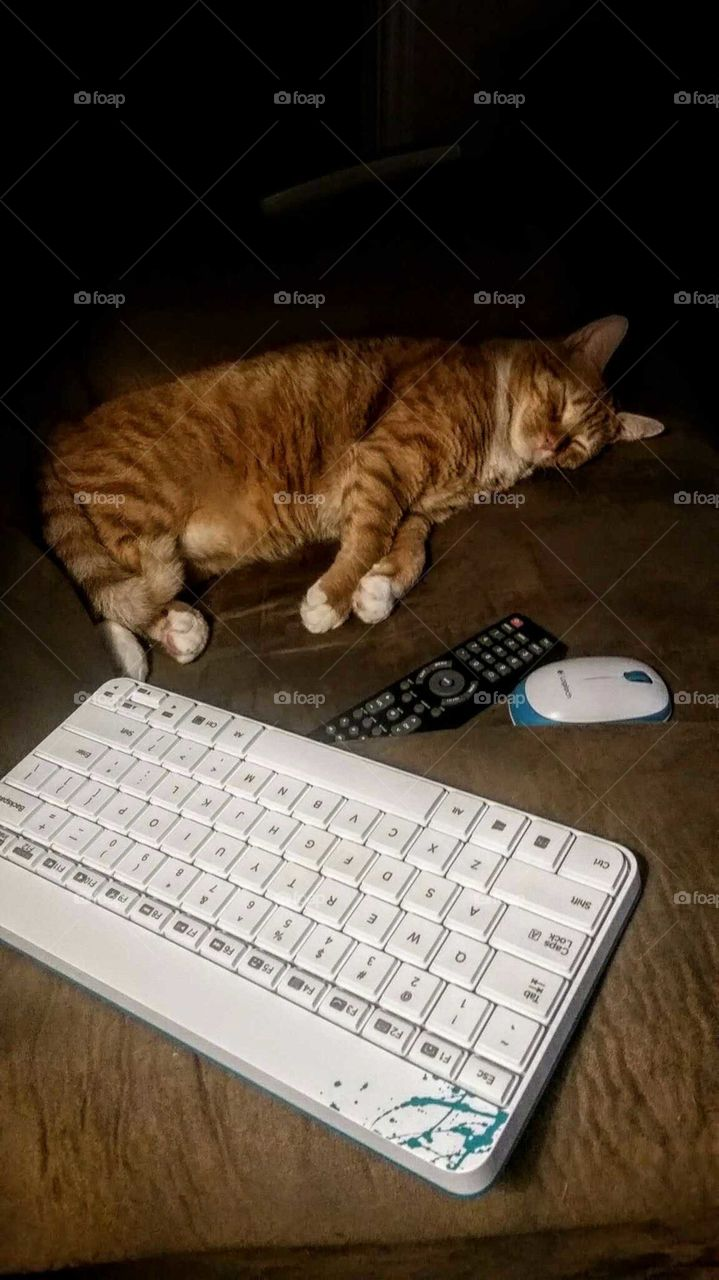 Cat,keyboard, mouse, And Remote Control.