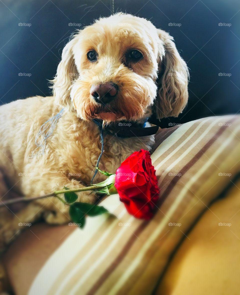 Amor de un perro