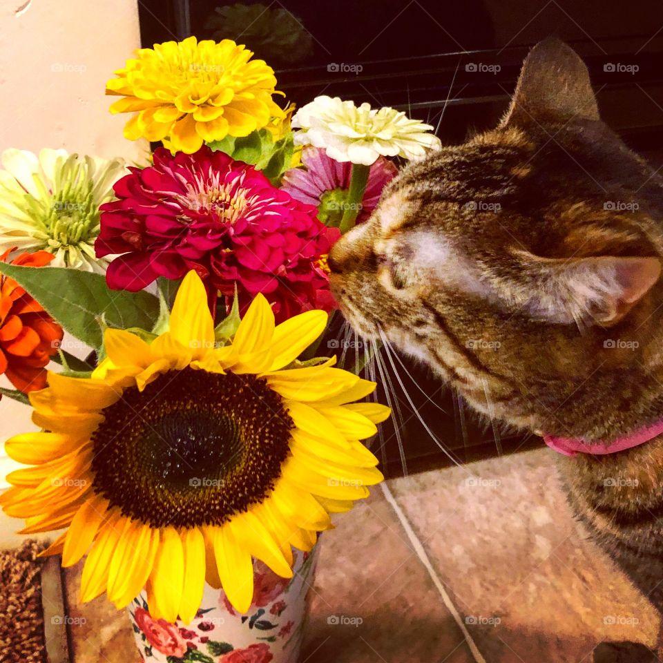 Curios cat smelling a bouquet of flowers