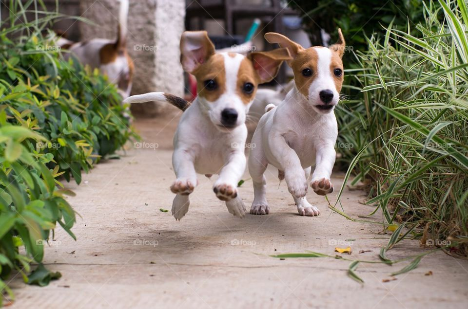 Two dogs running between plants