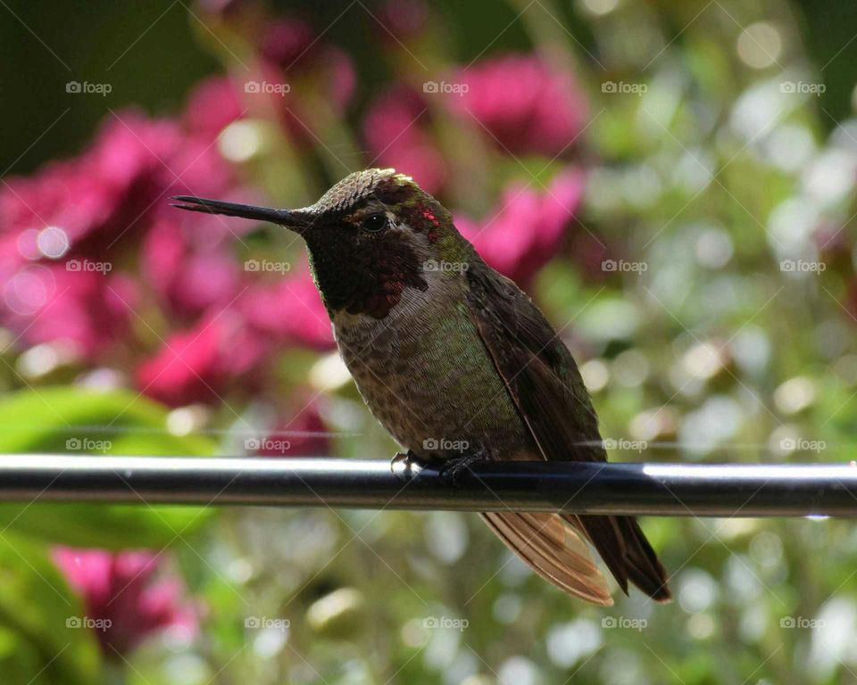 hummingbird sitting with beck open
