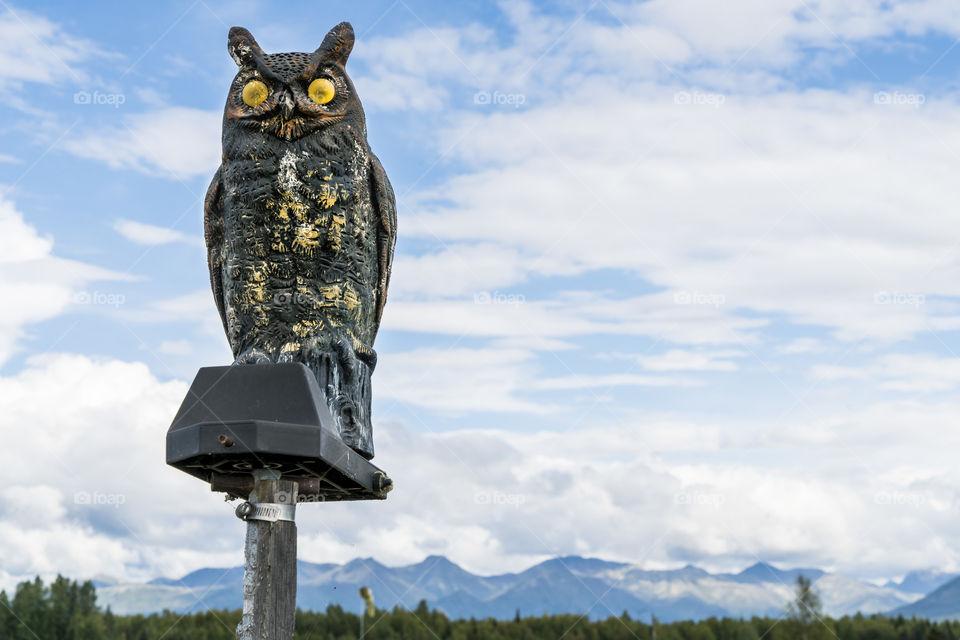 An owl overlooks the Alaskan landscape.