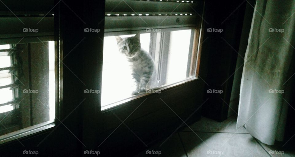 Kitty cat wants to be let in