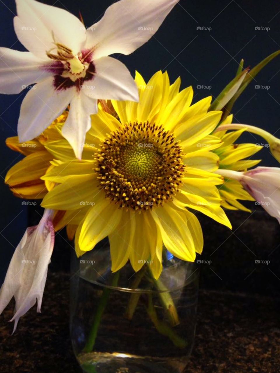 Sunflowers and white orchid gladiolus arranged in a mason jar. Navy blue background.