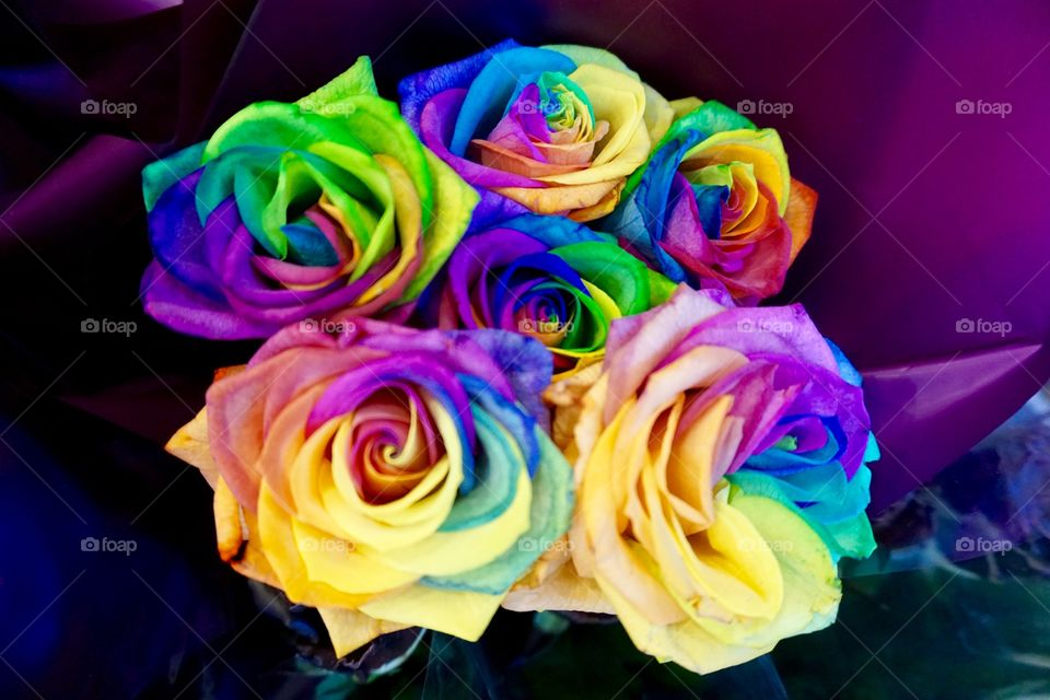 Rainbow Roses  How do they get their many colours ?