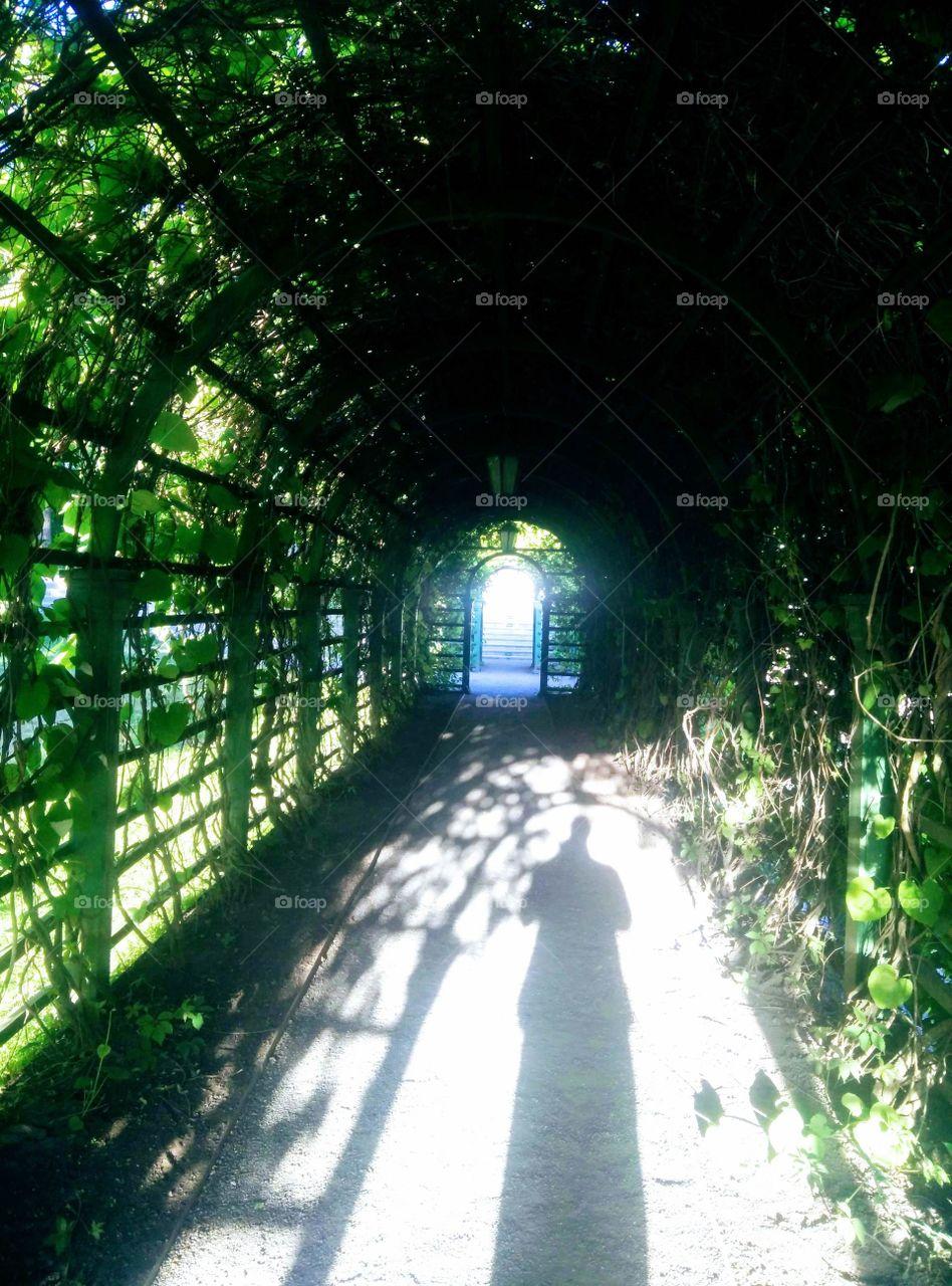 Shadows of garden. Park of Kadriorg. Estonia. Tallinn.