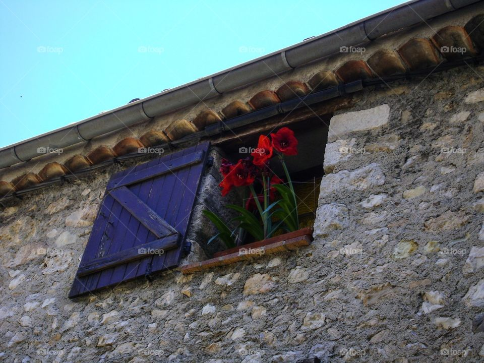 Plants in pots outside a house in small village in Provence.