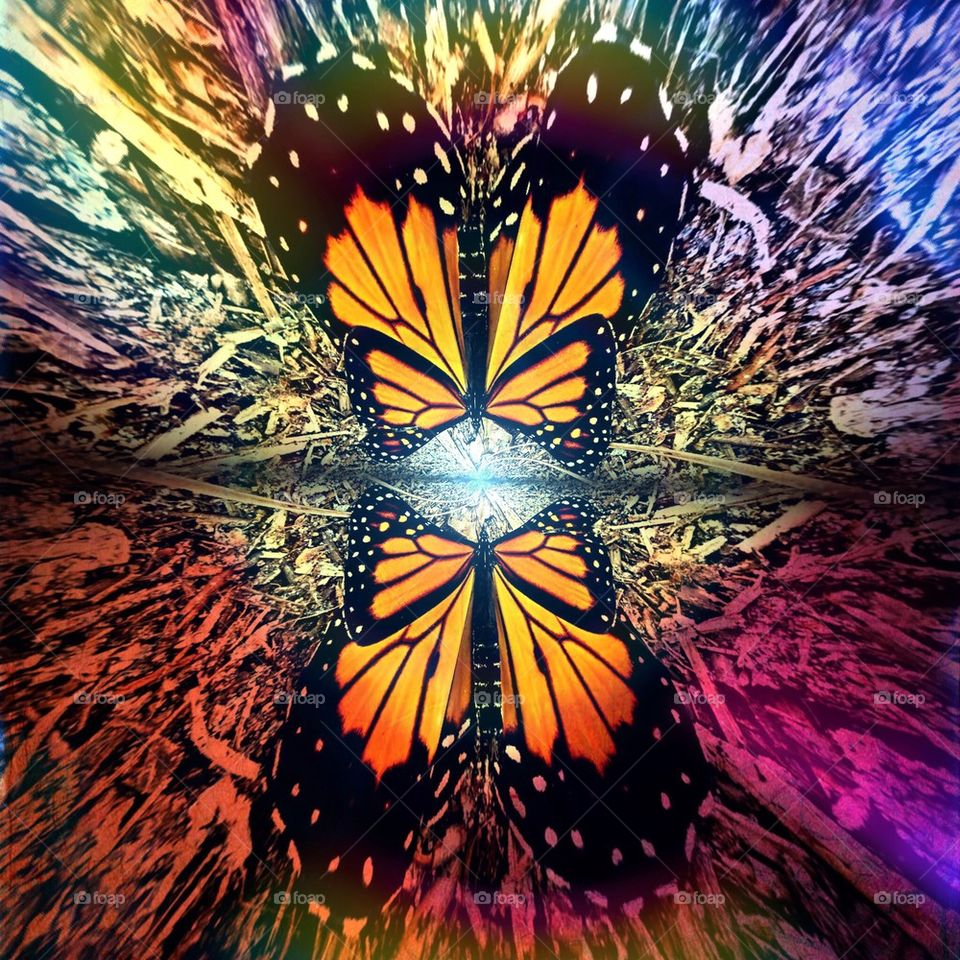 Butterfly dreamscape