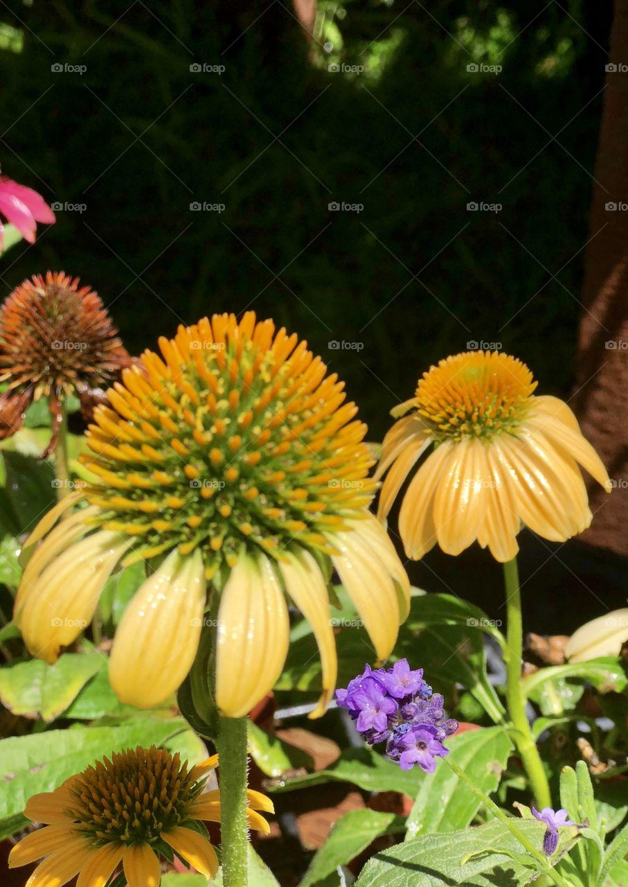 Beautiful Botanicals, Flowers, Botanical Art