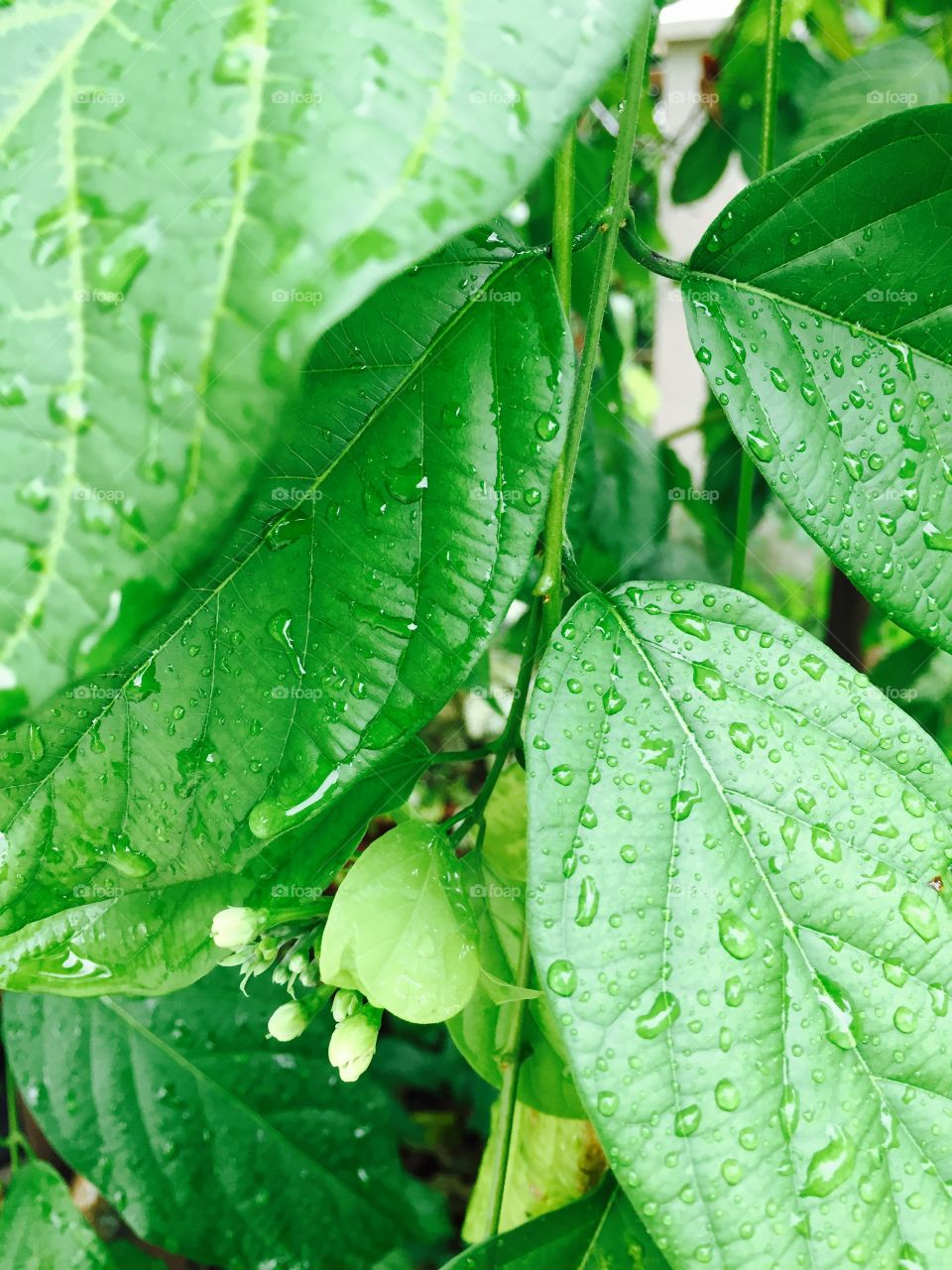 Leaves in the rain. Tropical nature