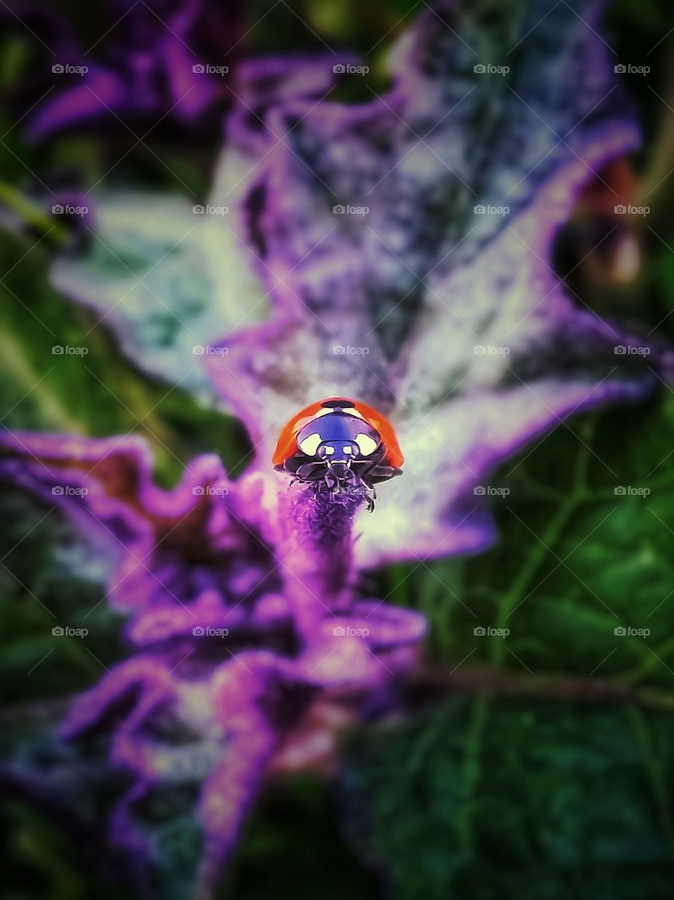Ladybug on a purple and green plant close up flora and fauna
